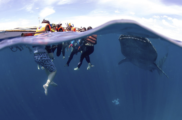 Oslob whale sharks. Image credit: Andre Snoopy Monten