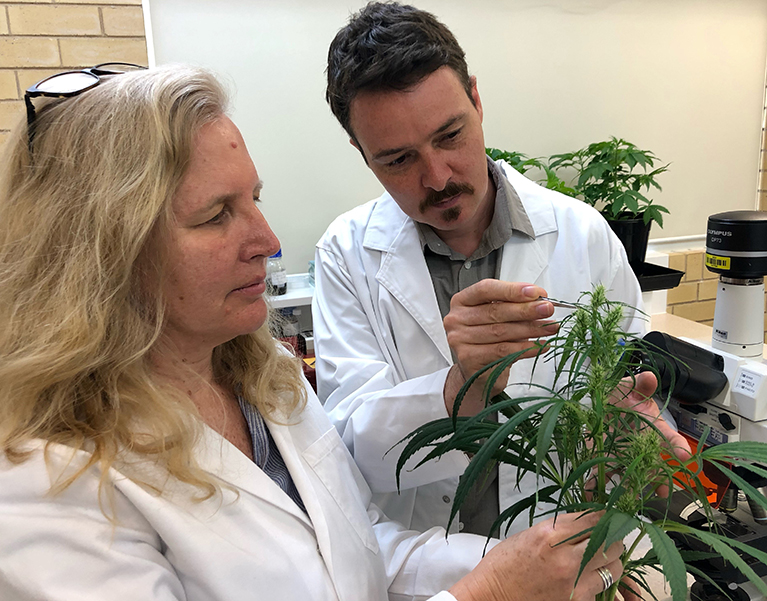 Associate Professor Bronwyn Barkla (left) Director of Southern Cross Plant Science and Associate Professor Tobias Kretzschmar inspecting the trichomes (leaf hairs) on a cannabis plant.