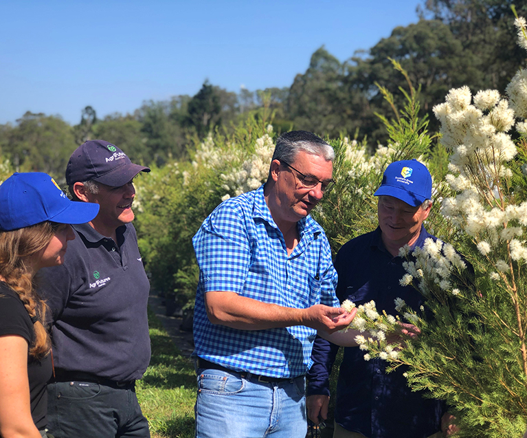 Tea tree breeding program partners are Southern Cross University and AgriFutures with support from industry association ATTIA