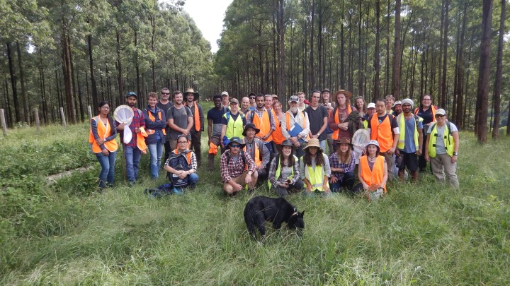 A Southern Cross University forestry class at a property near Nimbin belonging to Super Forests Plantations. The farm is being transitioned from grazing to wood production. They use cattle when the trees are young to control weeds. The background is plantation, roughly 10 years old, after crown closure when weeds are less of a problem.