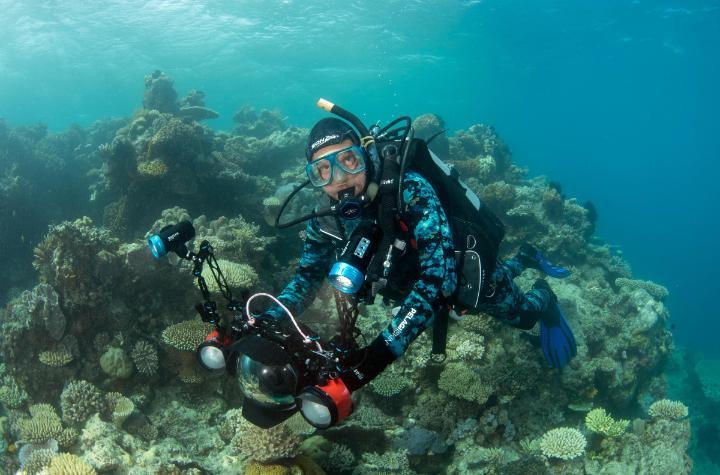 Man scuba diving at a coral reef
