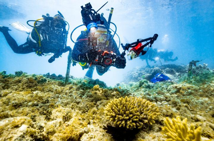 Scuba divers swimming in coral reef, with front diver holding a camera