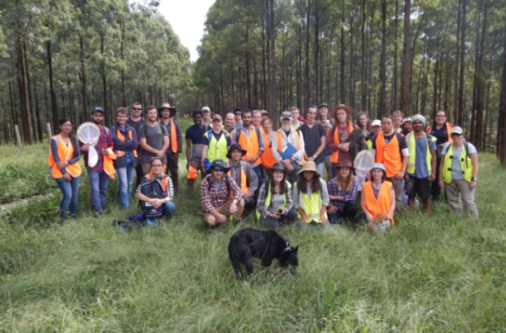 A Southern Cross University forestry class at a property near Nimbin belonging to Super Forest Plantations. The farm is being transitioned from grazing to wood production. They use cattle when the trees are young to control weeds. The background is plantation, roughly 10 years old, after crown closure when weeds are less of a problem.