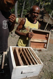 Beekeeping in Timor Leste